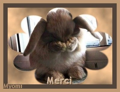 Divers merci animaux page 2 - 4 images 1 mot poussin lapin ...