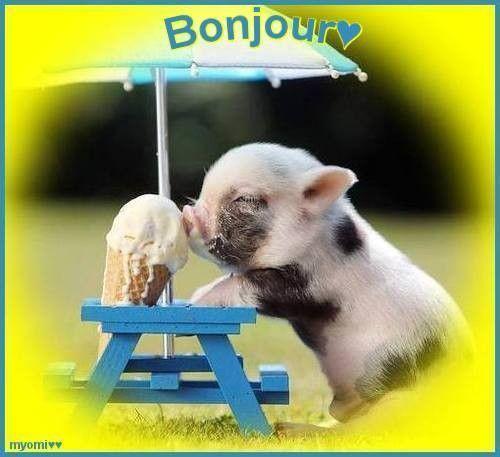 image animaux bonjour