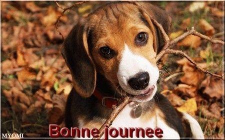 """Résultat de recherche d'images pour """"bonne journée chien"""""""