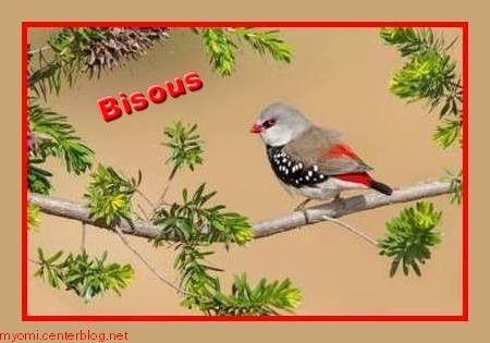 """Résultat de recherche d'images pour """"bisous oiseau"""""""